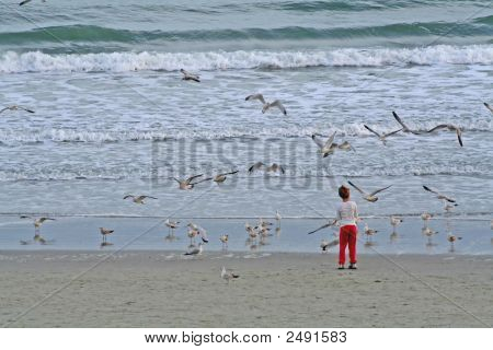 Girl Feeding Sea Gulls