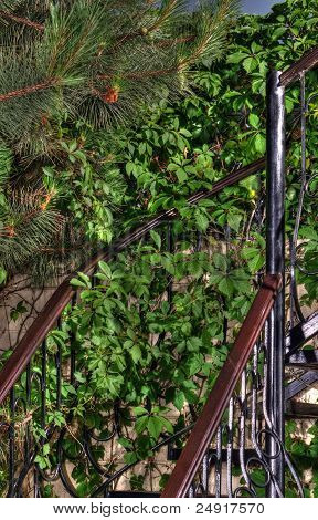 Spiral Wooden Staircase In A Green Garden