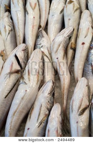 Fresh Codfishes At The Local Market