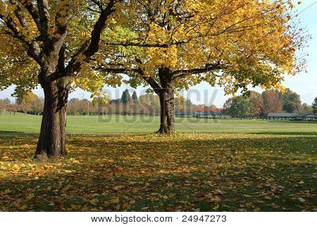 Fall Season In A Park, Portland Or.