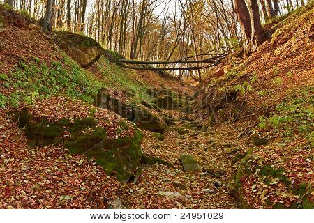Ravine In The Forest