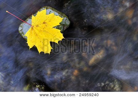 Autumn Leaf In A Stream