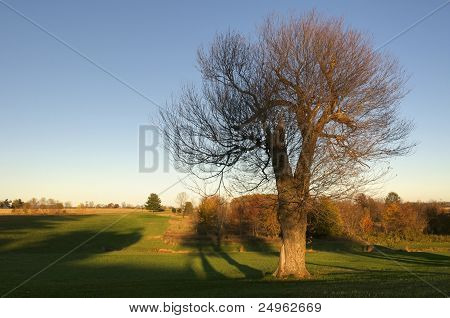 A Single Autumn Tree