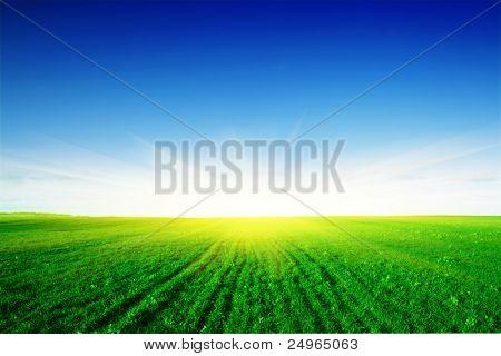Campo verde, o sol e o céu.