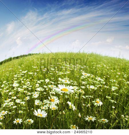 Flower field,blue sky and rainbow.