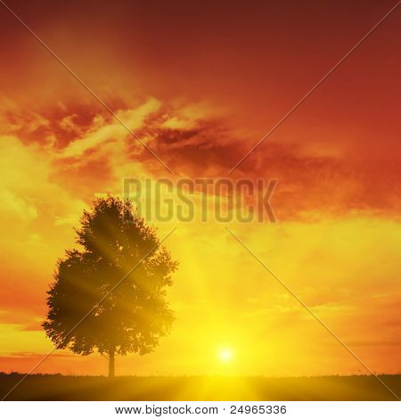 Silhouette of tree at sunset.