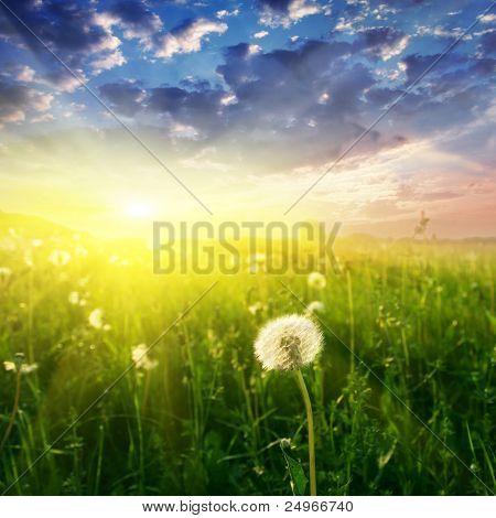 Campo do leão e por do sol.