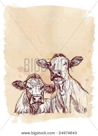 Two cows hand draw sketch & watercolor vintage background. Bitmap copy my vector id 87724645