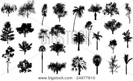 Set of trees and palm trees