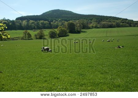 Rural Landscape, Scotland