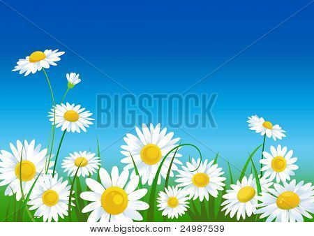 meadow with daisies with space for text