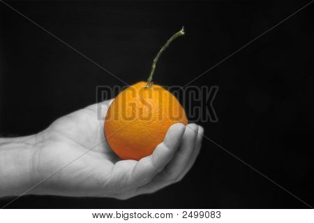 Holding An Orange