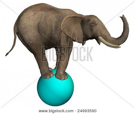Intelligent Elephant (isolated on white)