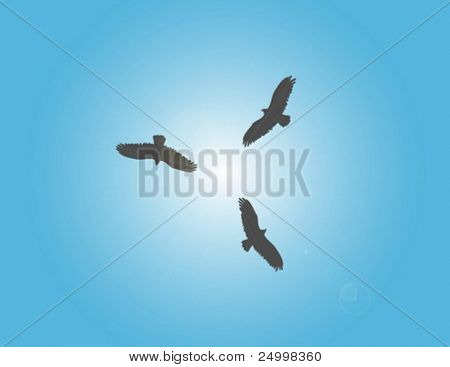 Three vultures circling over carcass