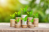 Tree Growing On Coins Stack With Sunray For Saving Money Concept poster