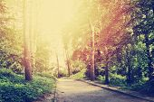 Footpath In The Park. Nature Summer Landscape. poster