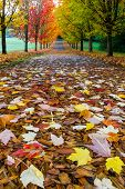 Hiking Trail At Tree-lined City Park In Oregon With Colorful Fall Foliage During Fall Season poster