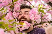 Man With Beard And Mustache On Happy Face Near Tender Pink Flowers. Hipster With Sakura Blossom In B poster