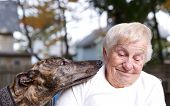 picture of greyhounds  - Senior lady with brindle greyhound in backyard - JPG
