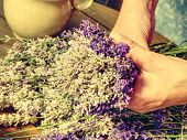 Skilful Hands Of Girl Putting Fresh Blossoms Of  Lavender Into Wonderfully Scented Bouquet. Flowers  poster