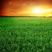 Green field and sunset sky.