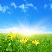stock photo of spring-weather  - Green field with spring flowers and sun in blue sky - JPG
