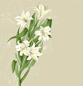 stock photo of easter lily  - Lily - JPG