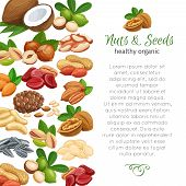 Page Design Template With Nuts And Seeds. Cola Nut, Pumpkin Seed, Peanut And Sunflower Seeds. Pistac poster