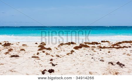 Tropical Beach, Ocean, And Sky