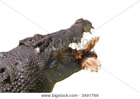 Croc Hunger
