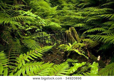 Tree trunk with fern