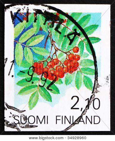 Postage stamp Finland 1991 European Rowan Fruit