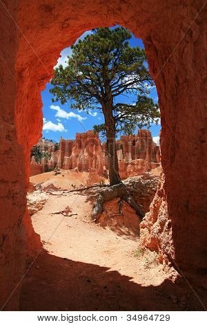 Window To The Hoodoos At Bryce Canyon National Park