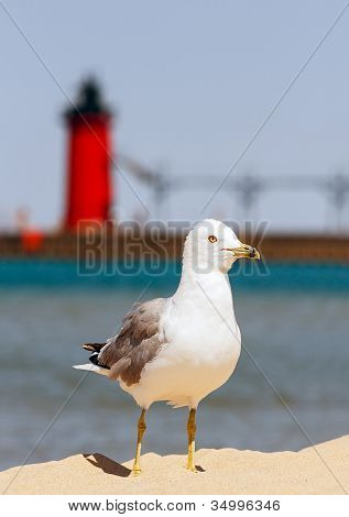 Seagul With South Haven Lighthouse