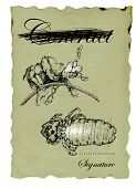 stock photo of lice  - shaded drawing hand made of human lice - JPG
