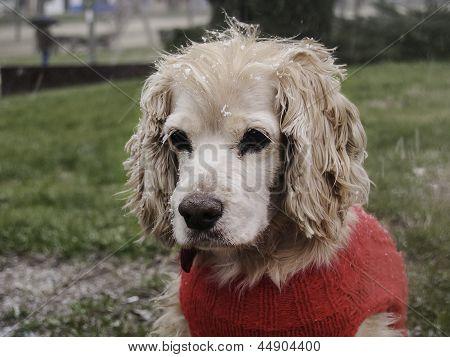 Snowed Dog