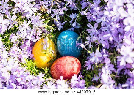 Ovos de Páscoa em Phlox