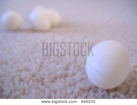 Cockatiel Eggs