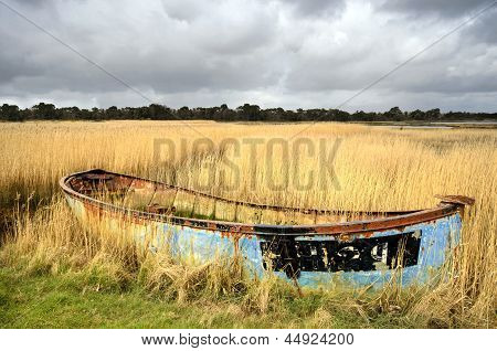 Abandoned Boat In Reeds
