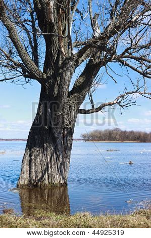 Tree Flooded With Water Due To Flooding