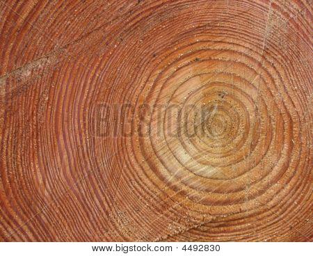 Stump Background