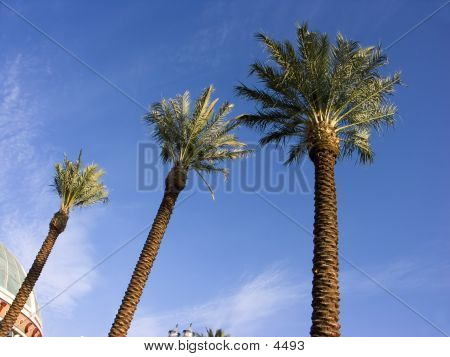 3 Palm Trees