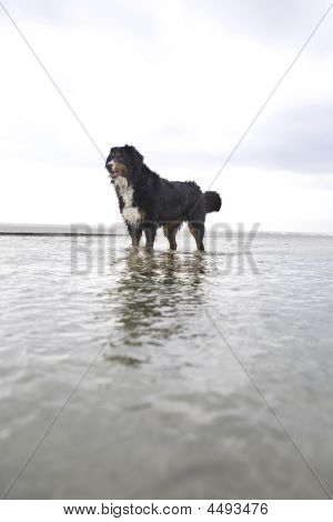 Hero Shot Of Dog In Ocean
