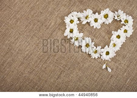 Flowers daisy shape heart on on fabric sack texture background , valentines day card concept