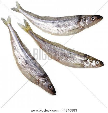 fresh smelts fish  isolated on white background