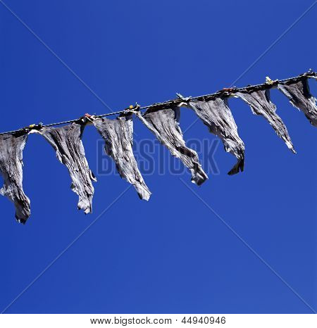 Stockfish At A Clothesline