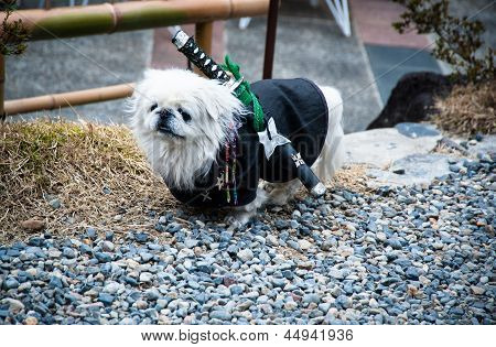 Samurai Dog