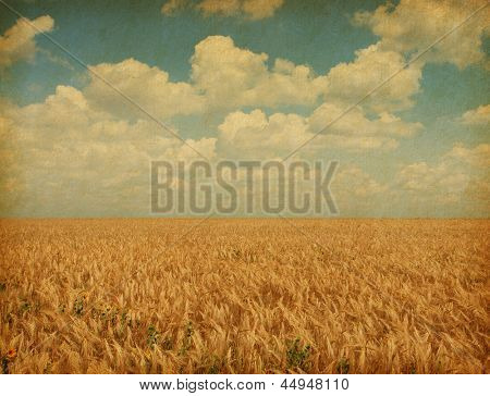 Field of wheat with sunflowers. Texture of old paper.