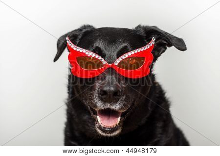 Black dog wearing funky red glasses