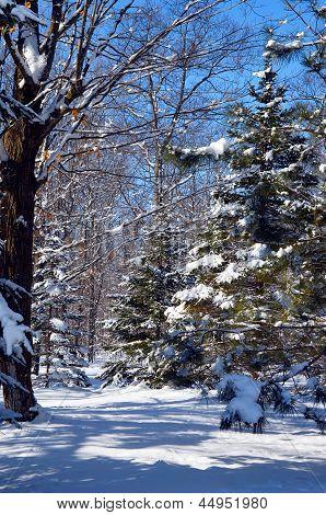 Bright beautiful Winter Wonderland